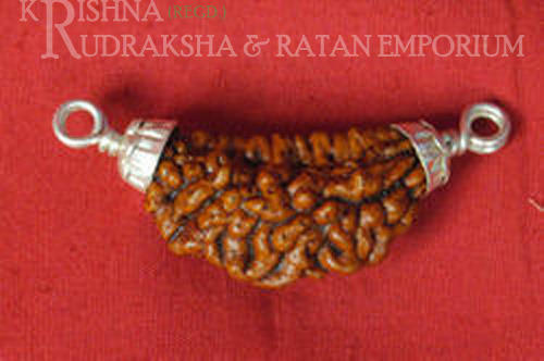 Himalya Rudraksha With Pure Silver Pedent( Lab Certified )
